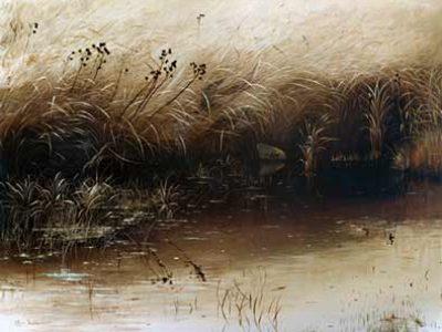 Home Image Grass